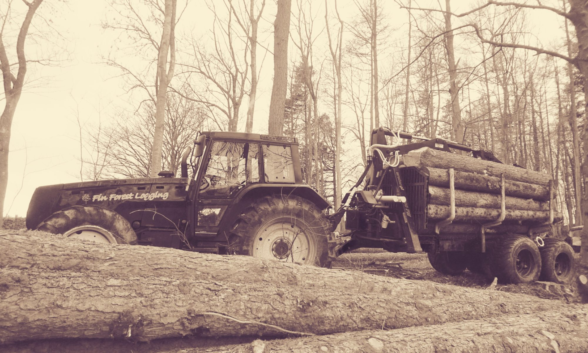 Fin Forest Logging